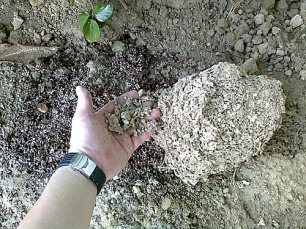 ↑ 地下型蟻巢挖掘進行中,此案為營造廠外面花圃,建物內各處皆已施工完畢,不開挖也可根治,為了研究各式白蟻巢內部情況,故將其開挖進行拍照記錄。